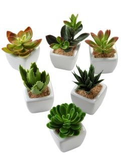 Kunstige planter, sukkulenter (5 deler), bpc living bonprix collection